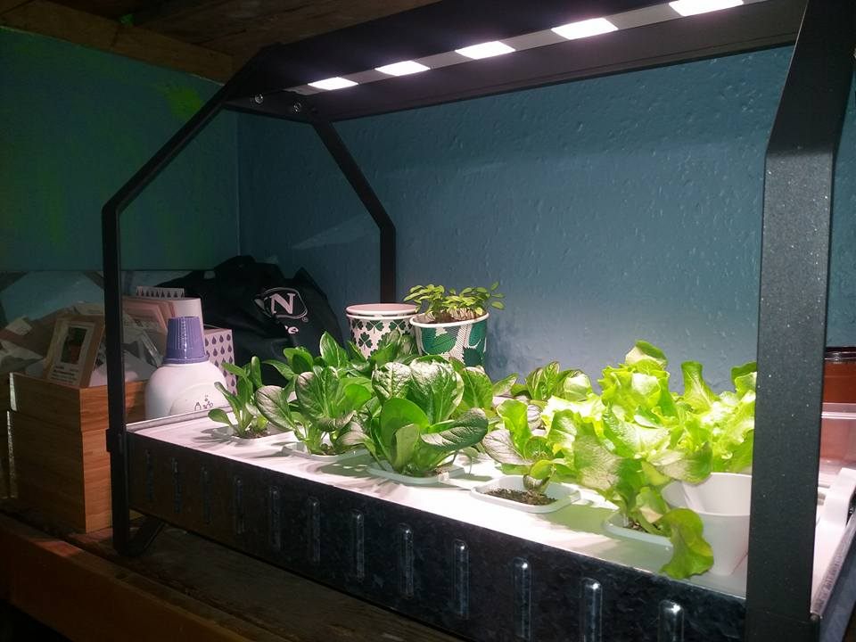 After 1 month under the VAXAR light we nearly have salad ready